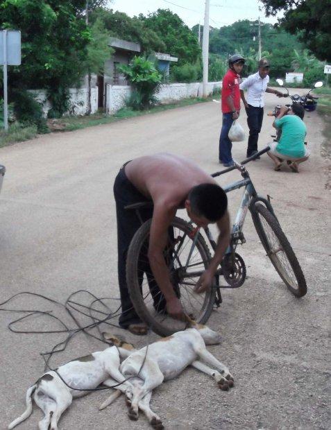 Yucatán mata perros y gatos por diversión