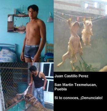 maltrato animal puebla facebook
