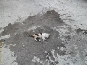 El gatito así quedó / foto de los vecinos proporcionada a Milenio