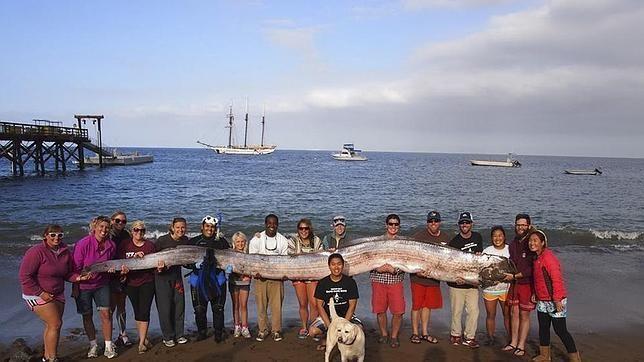 mosntruo marino california 2