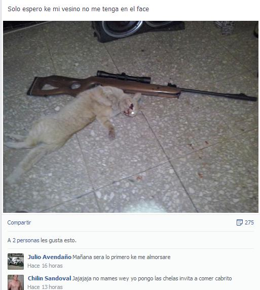 Photo of #MataGatos Levanta Indignación En Querétaro Al Presumir En Facebook Riflazo A Minino