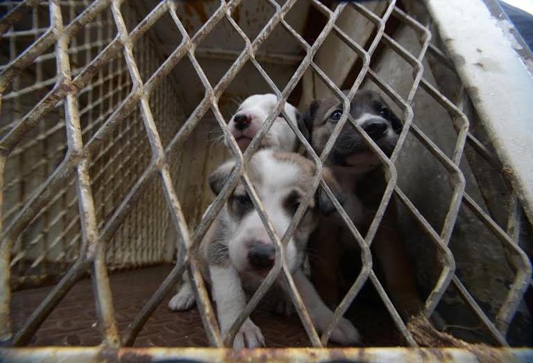 perritos cachorros en jaula