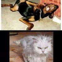 El gato se cayo al inodoro