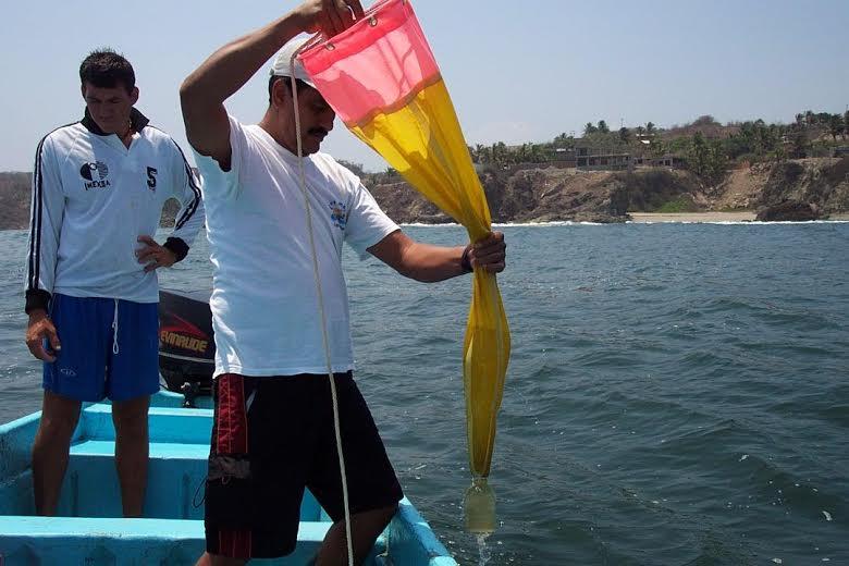 Photo of Vigilan playas michoacanas que no se presente marea roja: SSM
