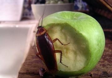 Mesera cucaracha