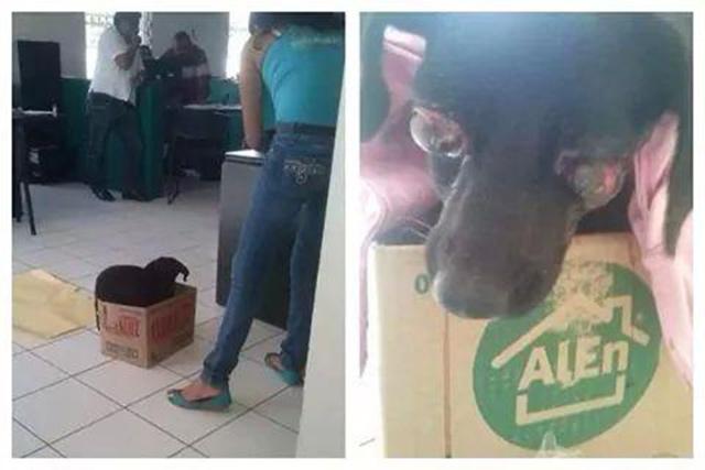 Max perrito abusado sexualmente hasta sacarle los ojos en Yucatán