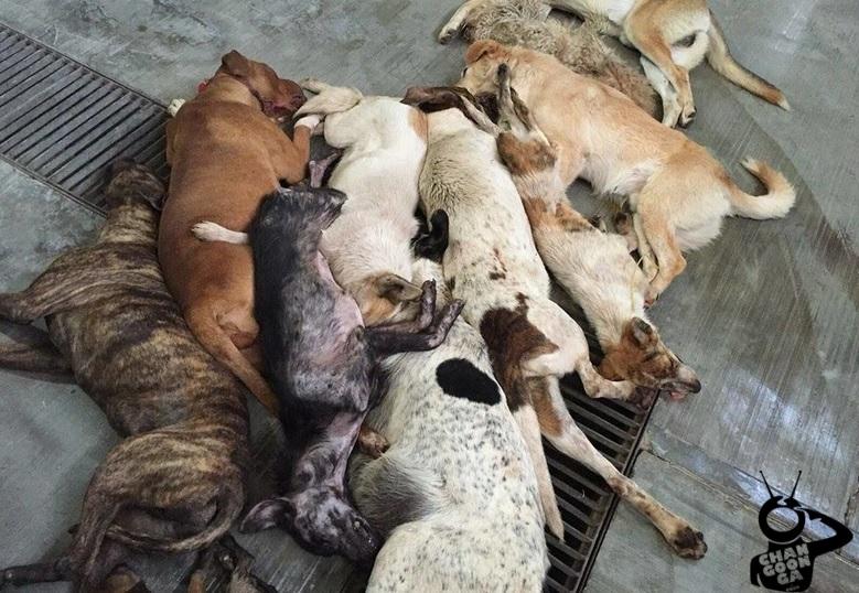 ESPECIAL // Animalistas y activistas captaron estas imágenes en la última semana de septiembre pasado, compartidas a este medio junto con el video