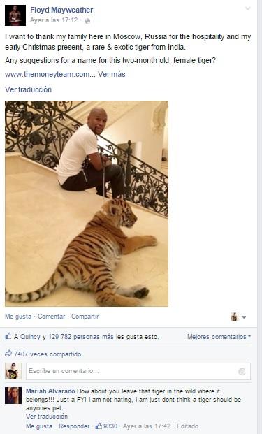 Animalistas VS A Floyd Mayweather Por Recibir A Un Tigre Como Regalo De Navidad