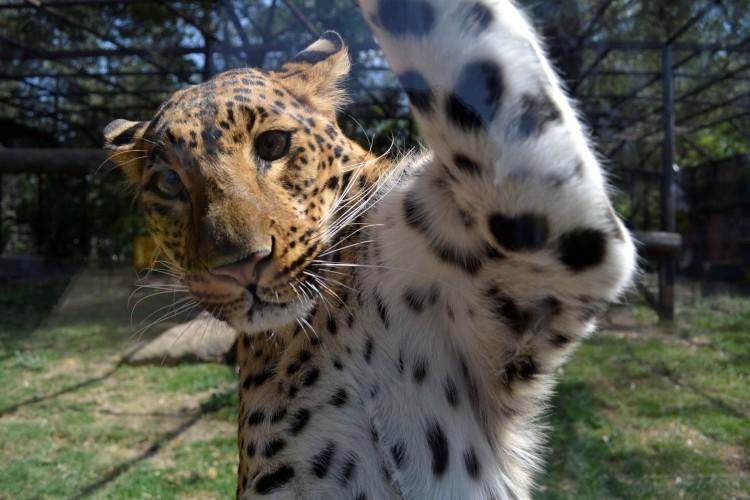 Zoo Moreliano Cierra Con 179 Bebés Nacidos 2015 1