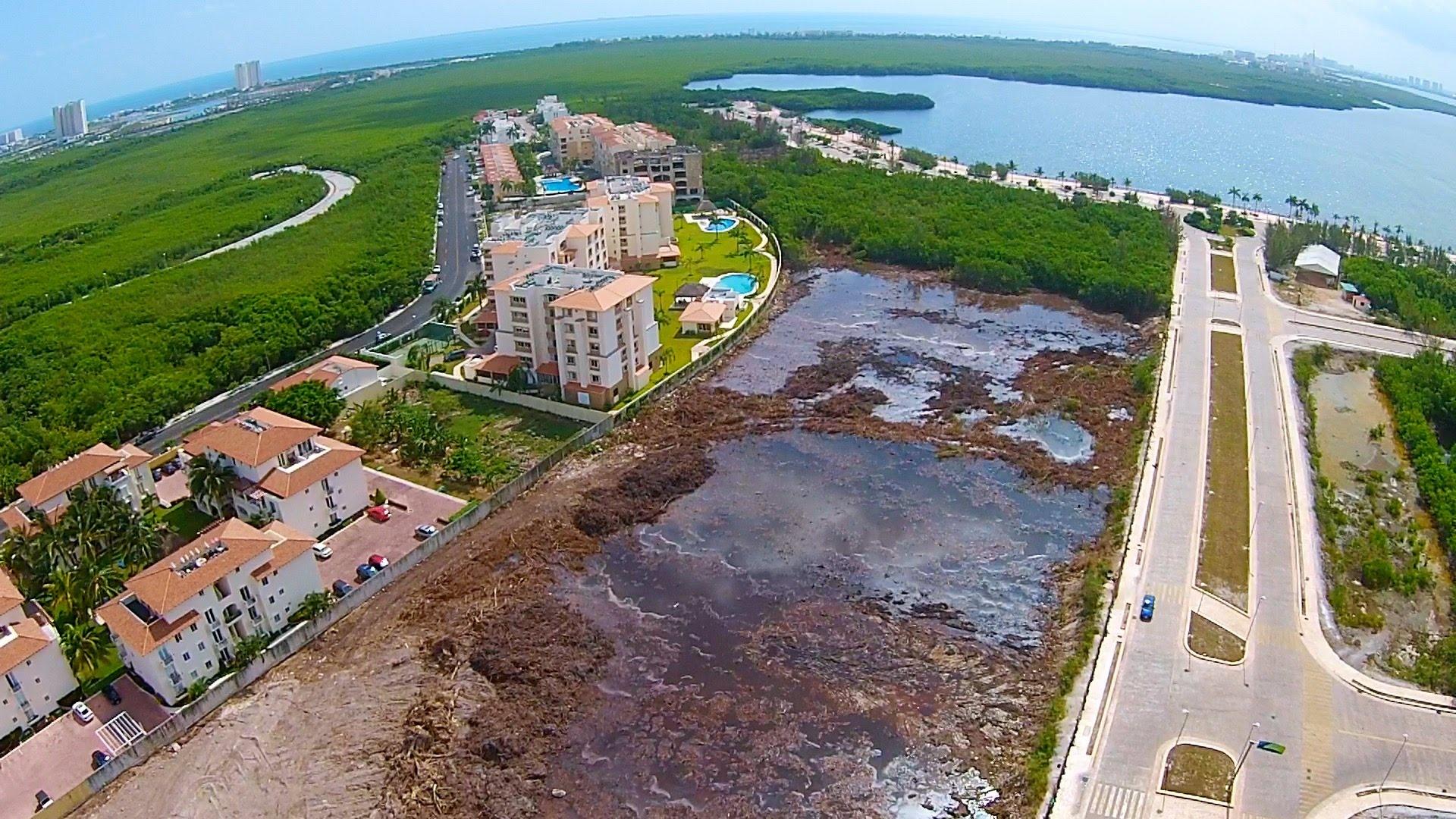 ecocidio cancun 2