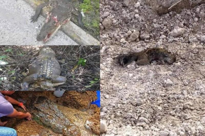 Asegura Profepa Que No Hay Indicios Para Declarar Ecocidio En Tajamar
