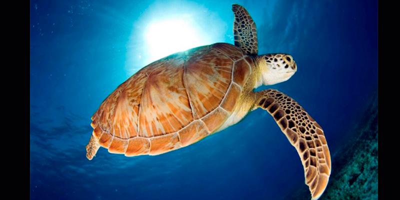 costa-Michoacana-campamento-tortuga