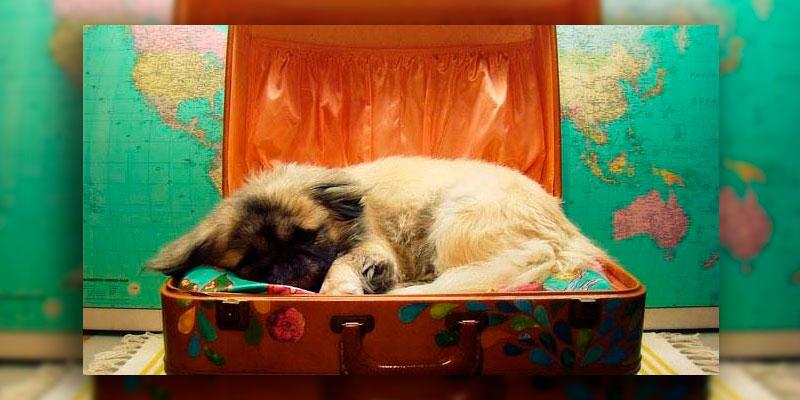 perrito-maleta-vacaciones