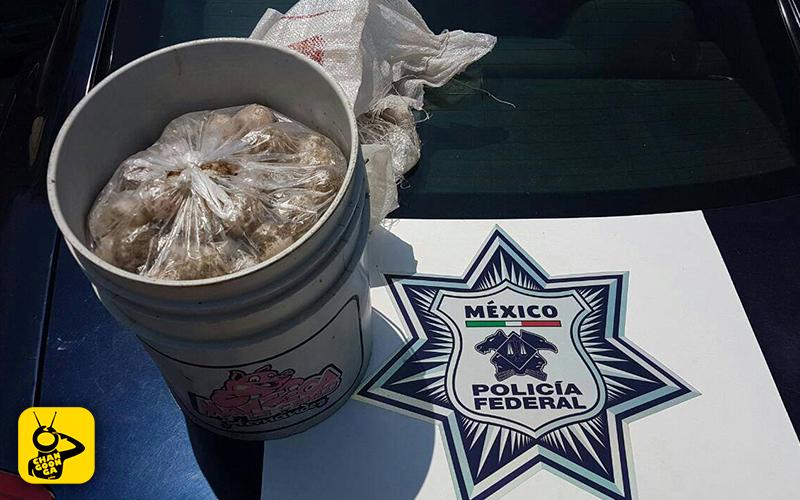 robo-huevos-tortuga-golfina-Michoacán-arribo-2017