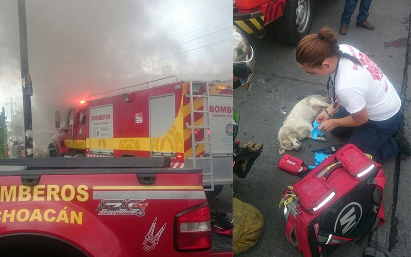 bomberos-rescatan-canes-Morelia-incendio