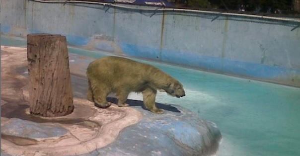 Photo of Traslado De Yupik Dependen De La Semarnat: Zoo De Morelia