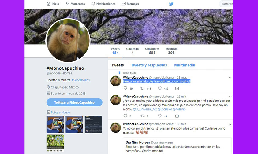 Photo of Mono Capuccino Ya Tiene Su Cuenta En Twitter @monodelaslomas