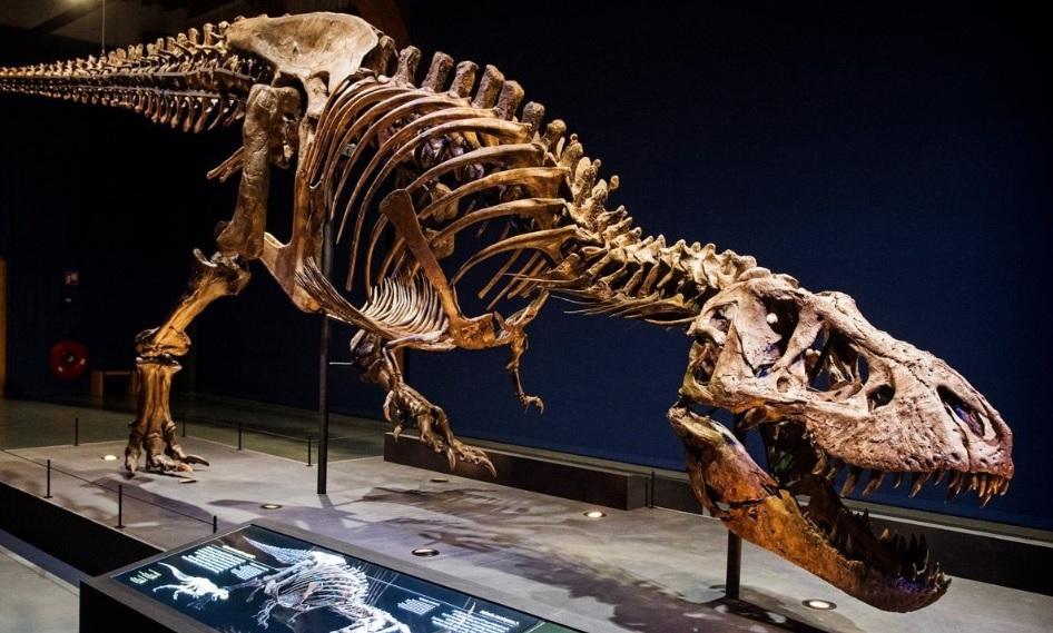 Photo of Auténtico Tiranosaurio Rex De 67 Millones De Años En Exhibición #París