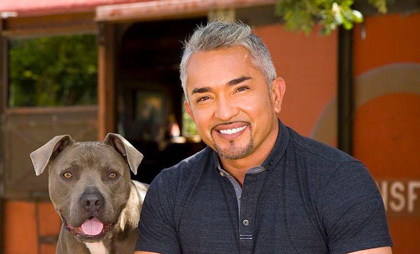 Photo of Tratar A Un Perro Como Ser Humano Es Maltrato Animal: César Millán