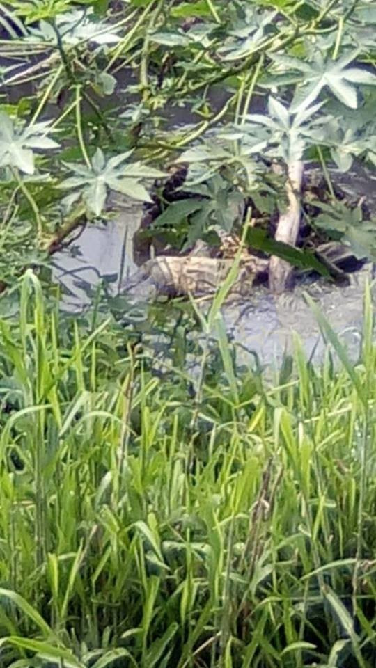 Photo of #Morelia Encuentran Hombre Muerto En Río Cercano A Atapaneo