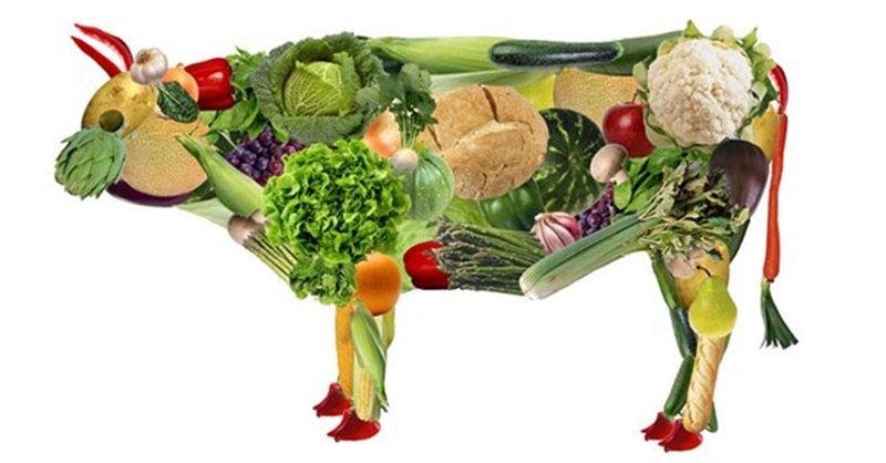 Photo of 20% De Mexicanos Ya Son Vegetarianos Y Veganos