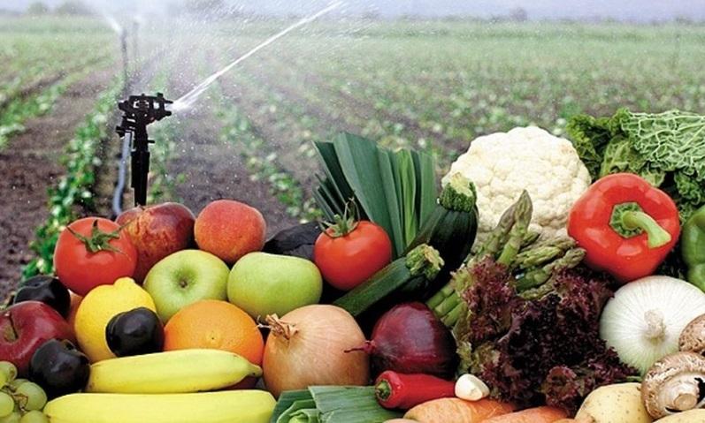 Photo of Invierten En Michoacán 165 MDP Para Seguro Agropecuario: Sedrua