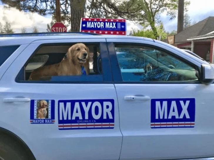 Photo of De Película, Max Es El Segundo Alcalde Canino
