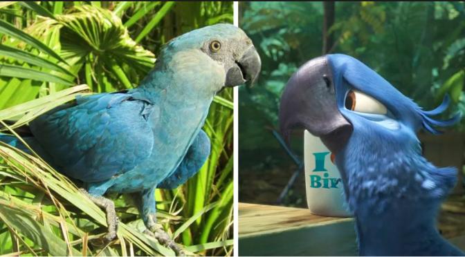 """Photo of Declaran Extinto A Guacamayo Azul Que Sirvió De Inspiración En Película """"Río"""""""