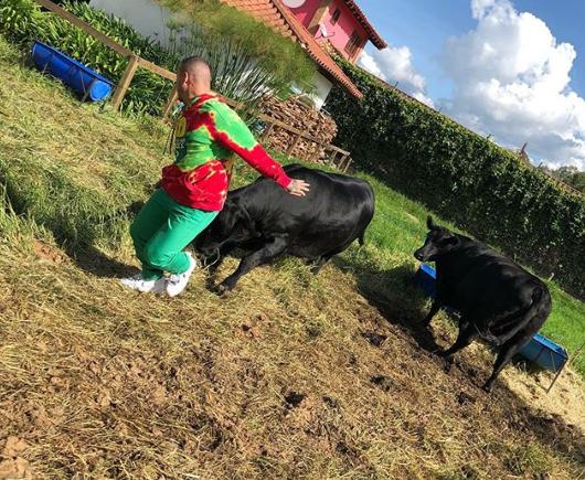 Photo of J Balvin Recibe Burlas Tras Ser Atacado Por Vaca