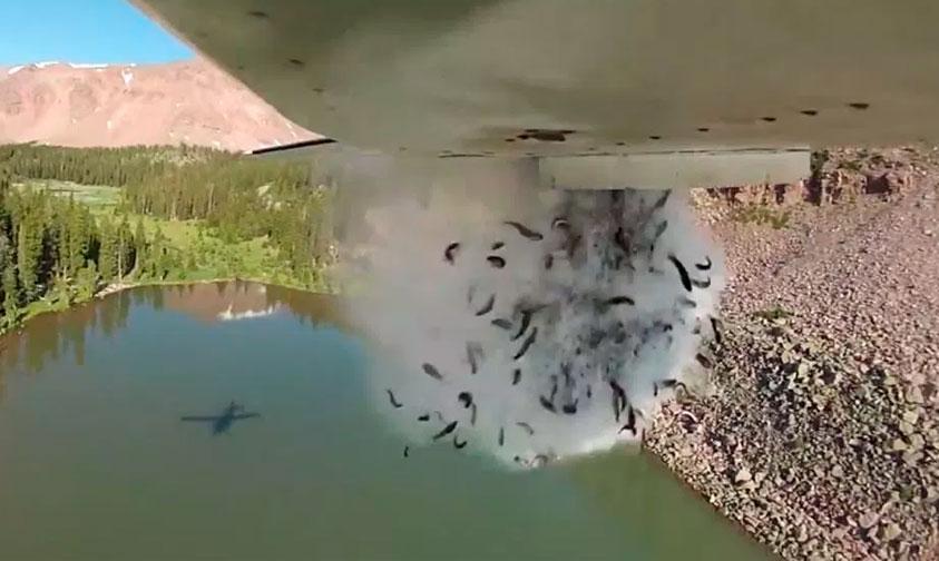Photo of #Video Con Lluvia De Peces Repueblan Ríos En Utah