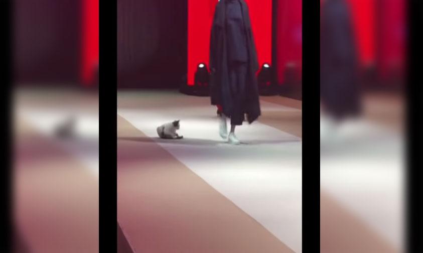 Photo of #Vídeo Gatito Se Roba Miradas Y Pasarela De Alta Costura