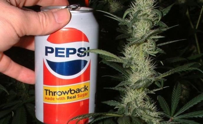 Photo of Pepsi ¿Con Mota? Pues Que También Quiere Entrarle Al Negocio