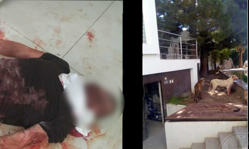 Photo of #Chihuahua Hombre Es Atacado Por Leona Que Tenía Como Mascota