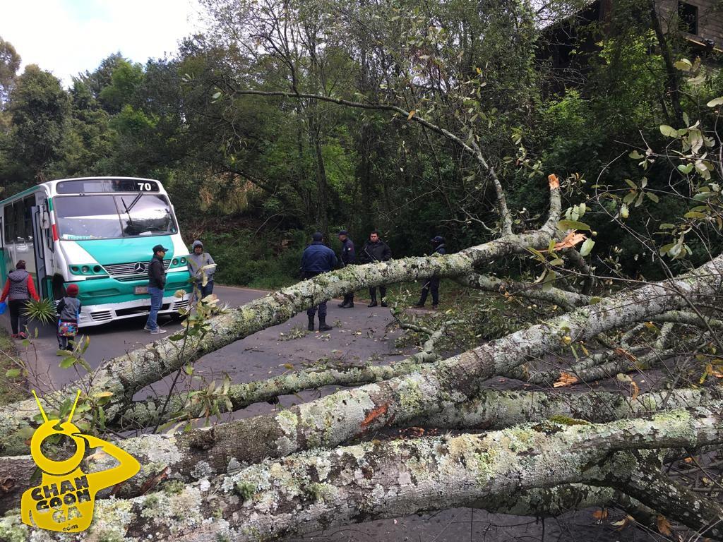 Photo of #Michoacán Se Cae Árbol En Carretera De Villa Madero, Obstruye Paso Vehicular
