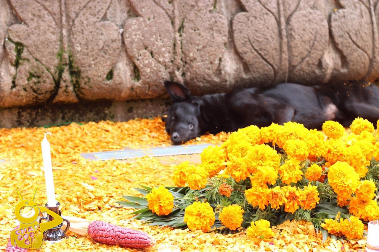 Photo of #Pátzcuaro Perro Posa En Ofrenda Y Lo Asocian Con Dante de COCO
