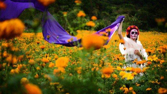 Photo of Esta Es La Hermosa Leyenda De La Flor De Cempasúchil