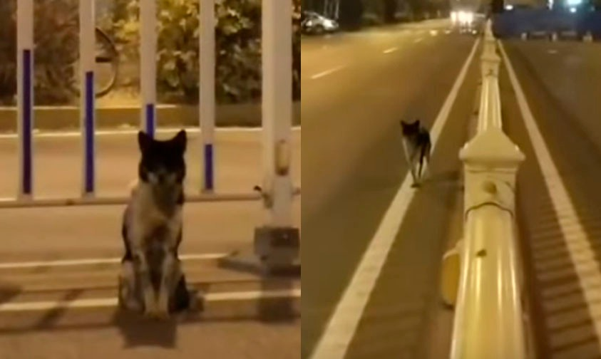 Photo of #VideoPerrito Espera A Su Dueña En El Lugar Donde Fue Atropellada