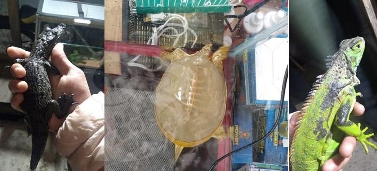 Photo of #Morelia Animales Exóticos Confiscados En El CañaFest Quedan A Resguardo Del Zoológico