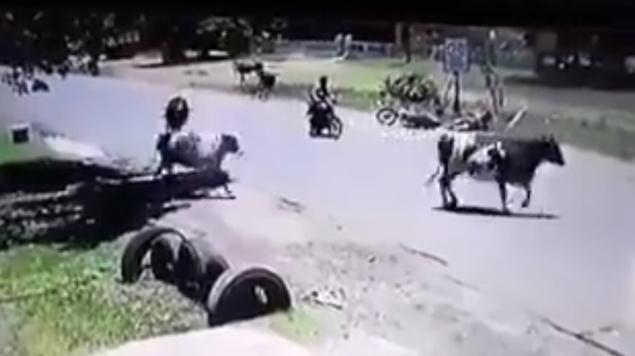 """Photo of #Video Vaca Tumba A Motociclista Con """"Patada Voladora"""""""
