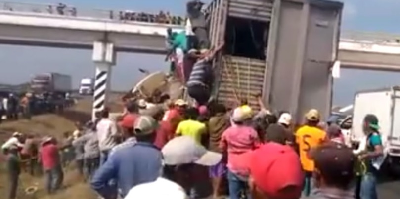 Photo of #VIDEO This Is México: Vuelca Camión Ganadero Y Gente Aprovecha Para Robarse Vacas
