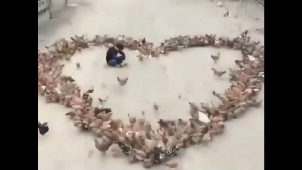 Photo of #Vídeo Morro Declara Su Amor Con Corazón Hecho De Gallinas