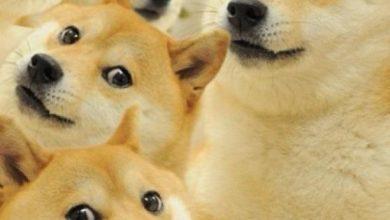 Photo of ¿Recuerdas A Doge? El Peludito De Los Memes Así Luce 13 Años Después