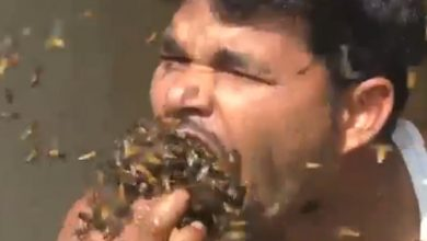 Photo of #Video Apicultor Mete Puño De Abejas En Su Boca Para Recolectar Miel