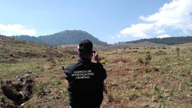 Photo of #Michoacán Investigan Extinción De Bosque Con Encinos Y Pinos En Pátzcuaro