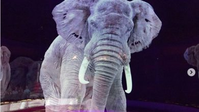 Photo of #Video ¡Hermoso! Circo Usa Hologramas En Vez De Animales Reales