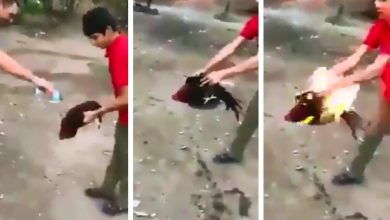 Photo of #Video Vatos Echan Gasolina Y Prenden A Gallo Por Diversión