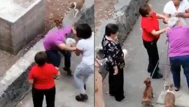 Photo of #Video Abuelita Defiende Perritos Y Morra La Golpea En CDMX