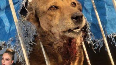 Photo of #Morelia Piden Apoyo De Autoridades Para Rescatar De Vivienda A Perro Lastimado