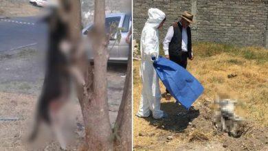 Photo of #Morelia Fiscalía Ya Investiga Muerte Por Crueldad De Perrita Preñada Y Ahorcada