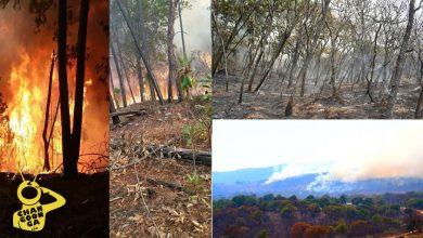 Photo of #Michoacán Sólo Brazas Y Animales Muertos, Saldo Tras Incendio De 3 Días En Copándaro